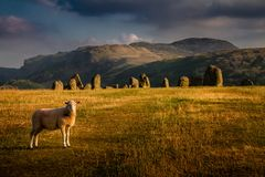 Großartige Ansicht des Castlerigg-Steinkreises mit einem Schaf an einem schwermütigen Sommertag im See-Bezirk Cumbria, stockfotos
