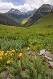 Großartige Ansicht Kolorado-Berge und Sommer stockbilder