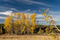 Großartige Bäume Teton und des Herbstes während der Abfallzeit des Jahres in Wyoming stockbild