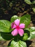 Großartige Blume Stockbild