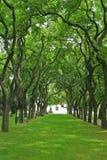 Großartige Gasse mit gewölbten aufgerollten Bäumen. lizenzfreie stockfotografie