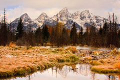 Großartige Teton Berge und Biber-Verdammung Stockfotos
