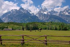 Großartige Teton-Pferde Lizenzfreie Stockfotografie