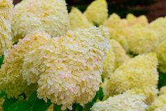Großartige und schöne Blumen im botanischen Garten von GijÃ-³ n am 1. August 2018 stockfotografie