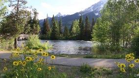 Großartiger Nationalpark Teton: Fluss und Balsamroot-Blumen stock footage