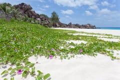 Großartiges Anse, La Digue, Seychellen Stockfotos