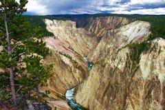 Großartiges Caynon des Yellowstone mit Kiefer im Vordergrund Lizenzfreie Stockfotografie