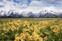 Großartiges Teton Stockfotografie
