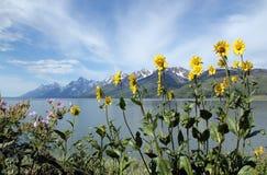 Großartiges Teton massiv lizenzfreie stockfotografie