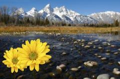 Großartiges Tetons im Frühjahr mit gelben Blumen Stockbild