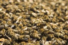 Großaufnahme in Bienenstock Lizenzfreie Stockfotos