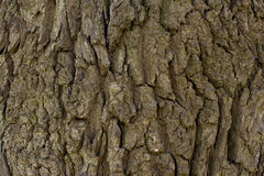 Großaufnahme der Baumrinde Beschaffenheit für Hintergrund Stockfotografie