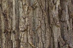 Großaufnahme der Eichenbarke Baumbeschaffenheit für Hintergrund Stockfotos