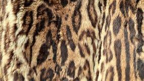 Großaufnahme der Haut eines Leoparden stockfoto