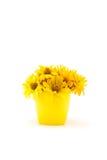 Großaufnahme der schönen gelben Chrysantheme blüht im Vase Lizenzfreie Stockbilder