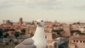 Großaufnahme der weißen kleinen Seemöwe, die herum schaut Vor dem hintergrund der alten Stadtdächer Lizenzfreie Stockfotografie