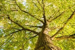Großaufnahme des alten und großen Baums Stockbilder