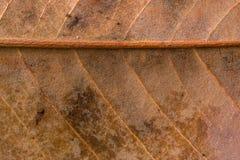 Großaufnahme des trockenen Blattes mit Regentropfen am Herbst Stockfoto