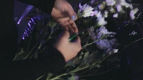 Großaufnahme von den weiblichen Händen, welche die Blumen von der Niederlassung mit Baumschere schneiden Florist, der Blumenstrau stock footage