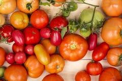 Großaufnahme von frischen Tomaten Junge saftige Tomaten Viele Tomaten Haufen der Tomaten Sommerlandwirtschaftsbauernhofmarkt-Behä Lizenzfreies Stockbild