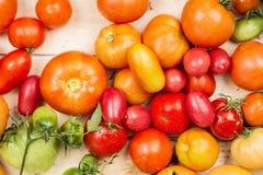 Großaufnahme von frischen Tomaten Junge saftige Tomaten Viele Tomaten Sommerlandwirtschaftsbauernhof-Marktbehälter voll des organ Lizenzfreie Stockfotografie