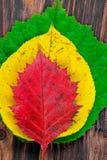 Großaufnahme von oben genanntem - eine Pyramide des farbigen Herbstlaubs an stockfoto