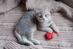 Großbritanniens kleine Kätzchenjagden Stockbild