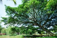Große alte Bäume Lizenzfreies Stockfoto