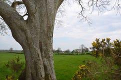 Große alte Baum- und Wiesennaturlandschaft Stockbild