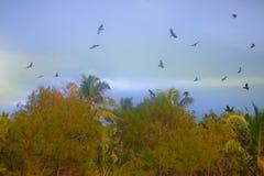 Große Anzahl indische Glanzkrähen erfasste in der Palmenwaldung Lizenzfreie Stockbilder