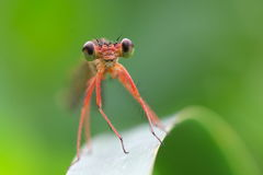 Große Augen Stockfoto