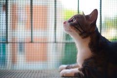 Große Augen Cat Portrait Profile auf Plastiknetz schlossen Terrasse in a Lizenzfreies Stockbild
