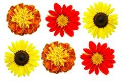 Große Auswahl-Blume Lizenzfreie Stockbilder