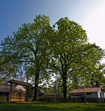 Große Bäume Lizenzfreies Stockbild