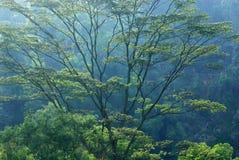 Große Bäume Lizenzfreie Stockbilder