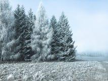 Große Bäume auf den Stadtränden eines gefrorenen Waldes lizenzfreie stockfotos