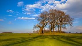 Große Bäume auf einem ernsten Hügel des Hügelgrabes in den hellen Farben Stockbild
