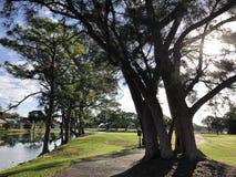 große Bäume auf einem Golfplatz stockfoto