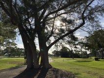 große Bäume auf einem Golfplatz lizenzfreie stockbilder