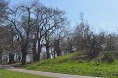 Große Bäume auf einem Hügel Lizenzfreie Stockfotos