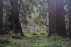 Große Bäume gegen den Wald Stockbilder