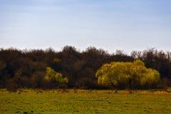 große Bäume im Vorfrühling Lizenzfreie Stockfotografie
