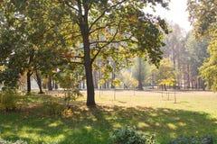 Große Bäume mit gelben Blättern und Grünfeldern Früher Herbst Stockfotografie