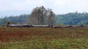 Große Bäume schnitten mitten in dem Wald stockfotos