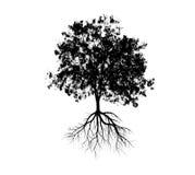 Große Baumschattenbilder Lizenzfreies Stockbild