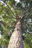 Große Baumzweige Stockfoto