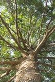 Große Baumzweige Stockbilder