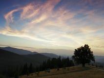 Große Berge Einsamer Baum nahe dem Wanderweg lizenzfreie stockfotos