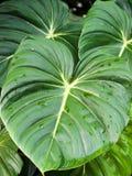 Große Blätter stockbilder