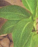 Große Blätter auf dem Hintergrund von Steinen Filtration in Form einer Masche Lizenzfreies Stockfoto